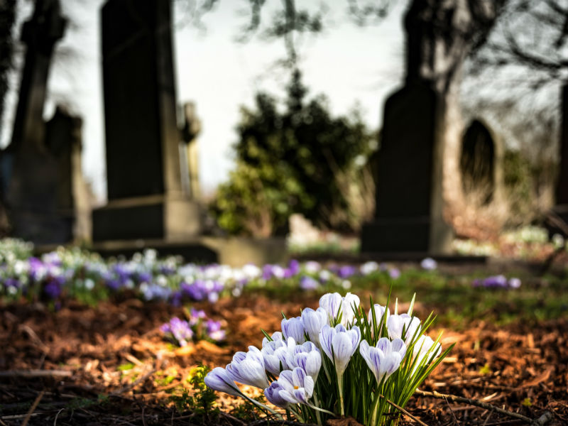 flowers in a graveyard