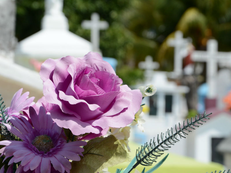 lilac rose and daisy against a backdrop of christian gravestones