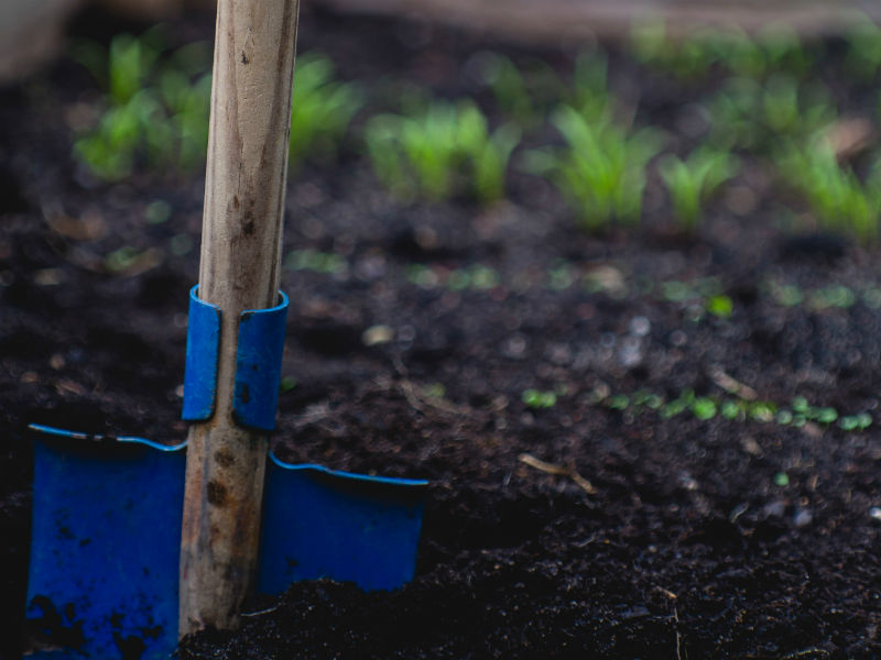 gardening as grief therapy - a spade in the soil, where seedlings are sprouting