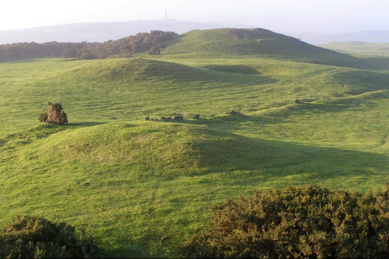 View of several round barrows at Bronkham Hill, Dorset