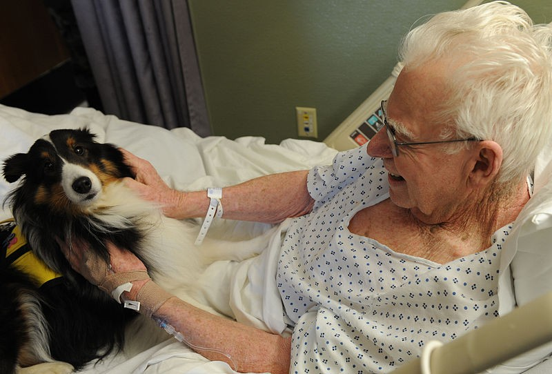 Old man in a hospital bed petting a black, white and tan therapy dog