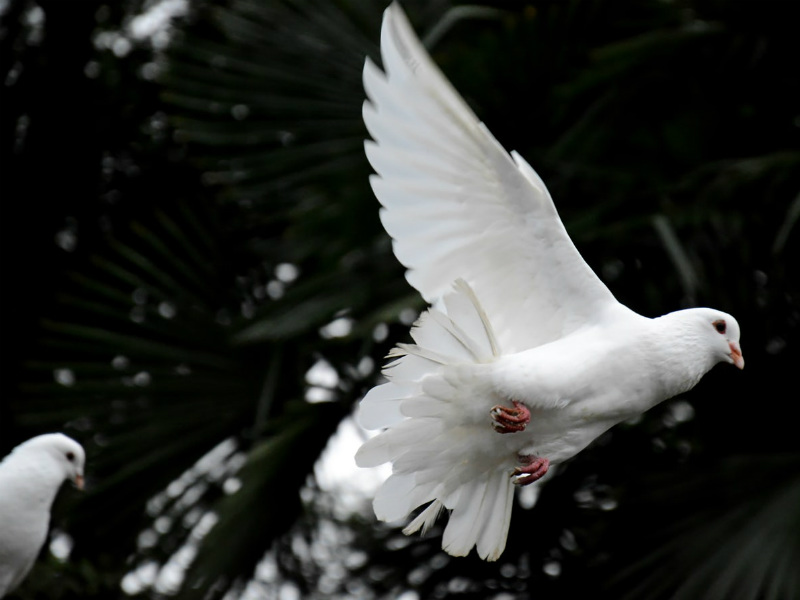 Doves via Unsplash