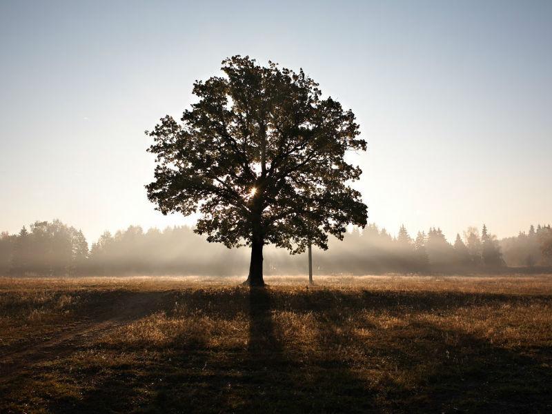 tree photo via Unsplash