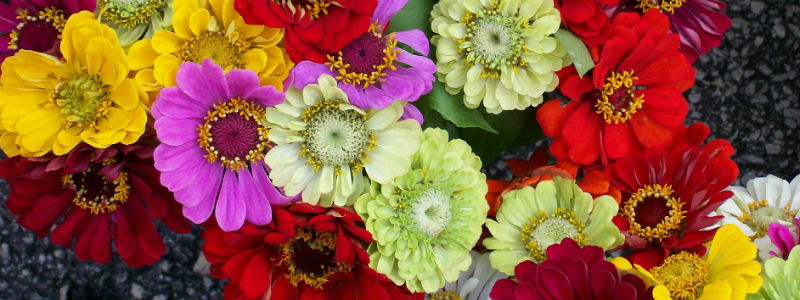 Red, yellow and pink funeral flowers