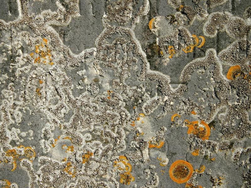 Closeup of a lichen-covered gravestone