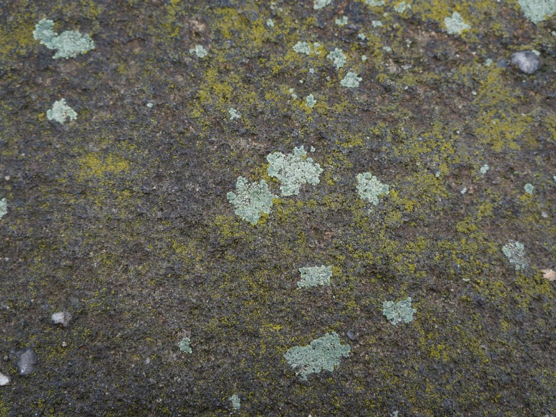 Closeup of moss on an old gravestone