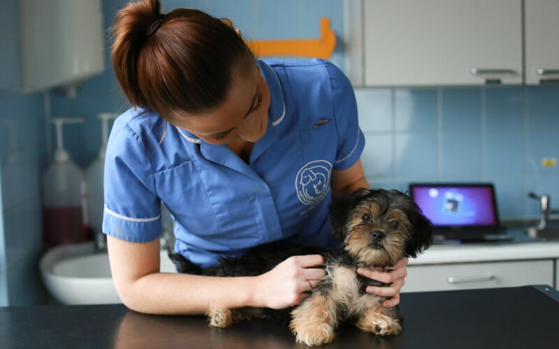A vet examining a puppy at Battersea Dogs Home