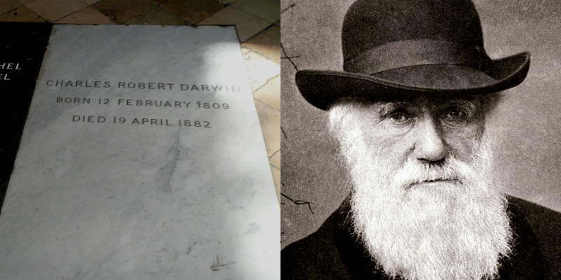 Darwin's grave in Westminster Abbey