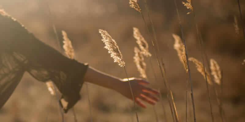 Woman walking through a field, running her hands through the tallgrass