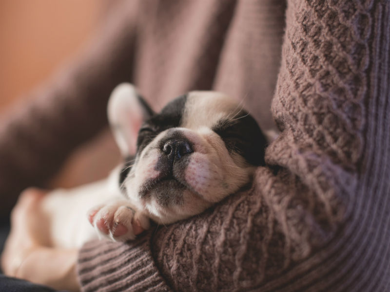 who will look after my dog when i die- french bulldog