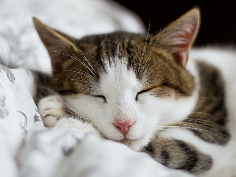 who will look after my cat when i die - sleeping cat