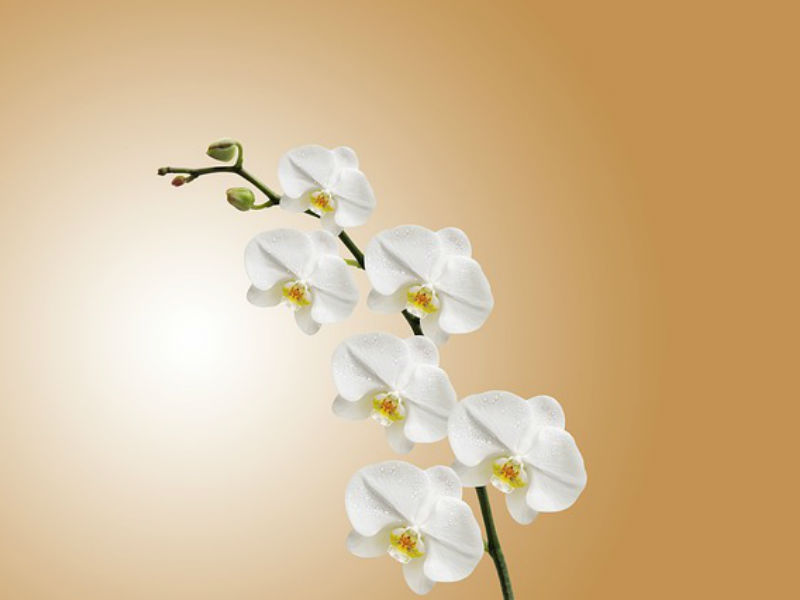 orchids for funerals