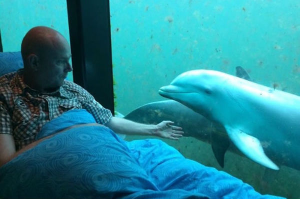 A man on a stretcher watching dolphins swim through an aquarium window