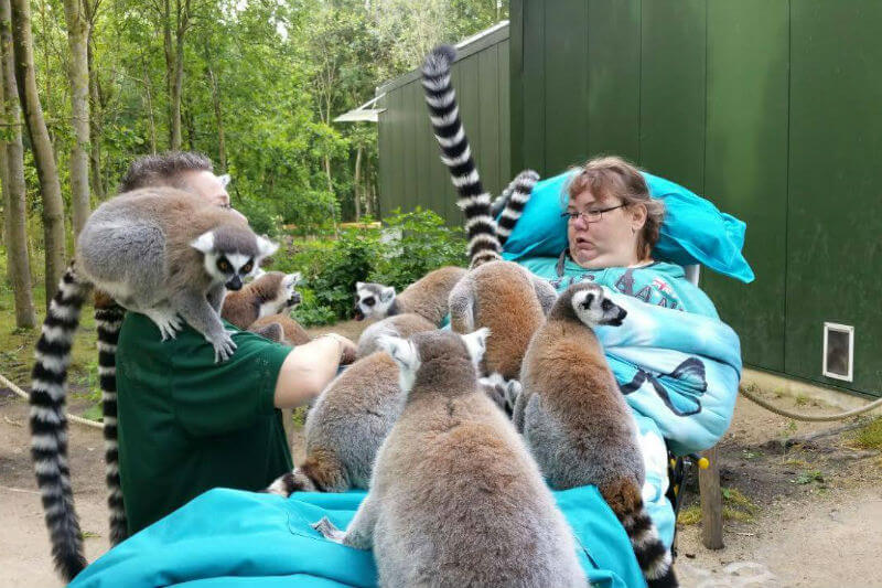 Woman on a stretcher with seven ring-tailed lemurs sitting on her bed