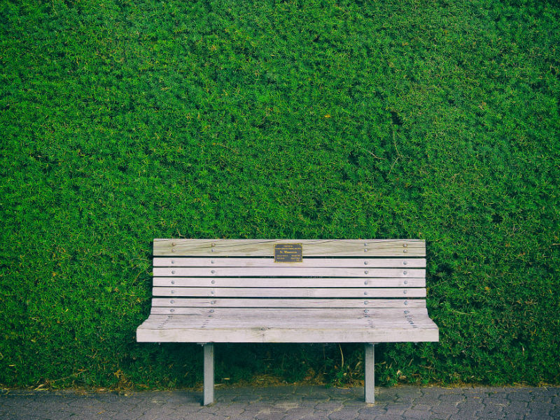 A memorial bench with a plaque in front of a green yew hedge