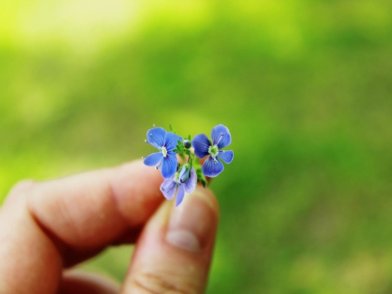 memorial garden ideas - forget me nots