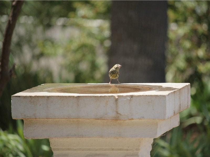 A stone bird bath