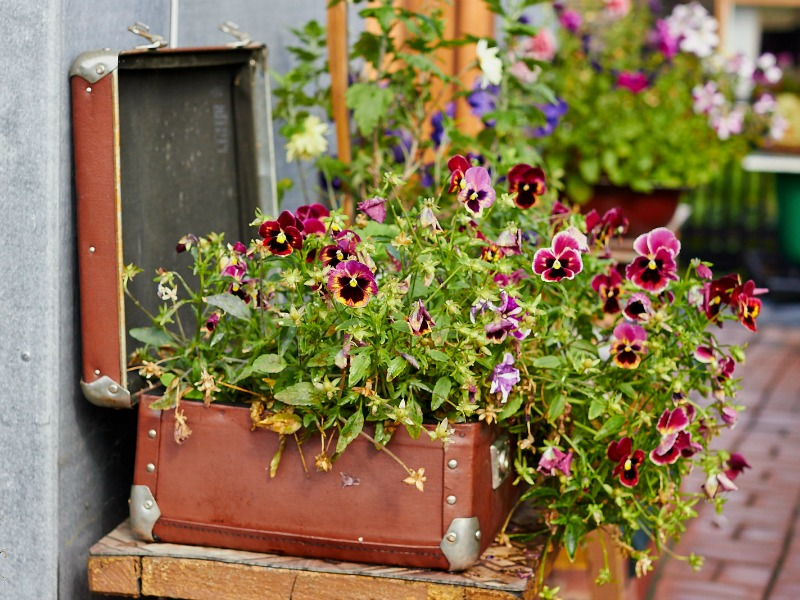 Flowers planted in an old suitcase