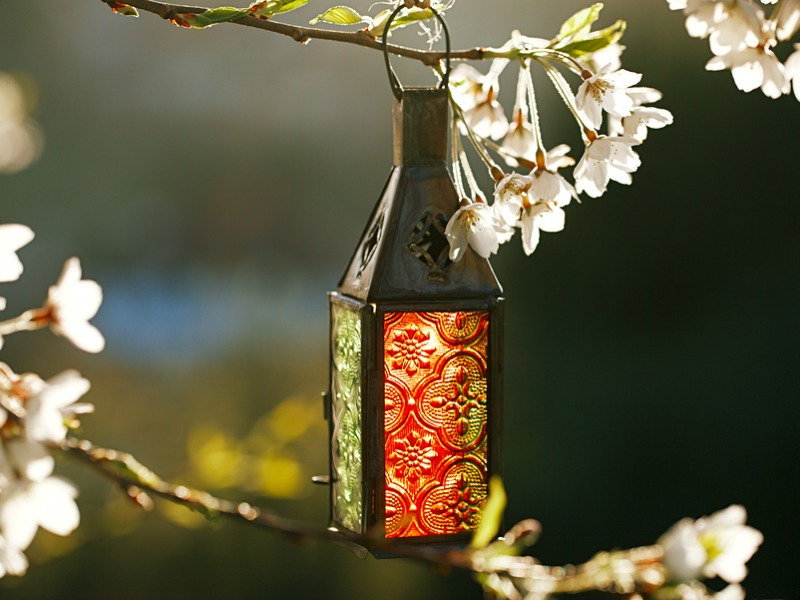 A decorative glass lantern hangs on the bough of a flowering cherry tree