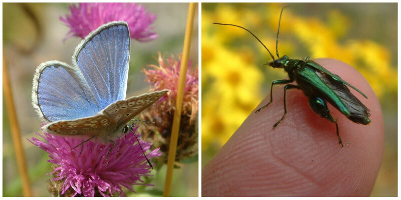 A pale blue butterfly and green insect