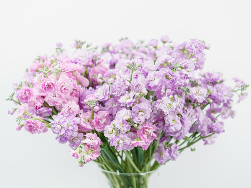popular funeral flowers stocks