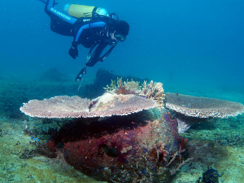 A scuba diver inspects coral growing from a reef ball