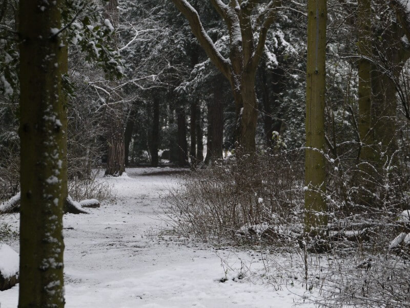 Photo of snowy woodland; reminiscent of C.S. Lewis's descriptions of Narnia