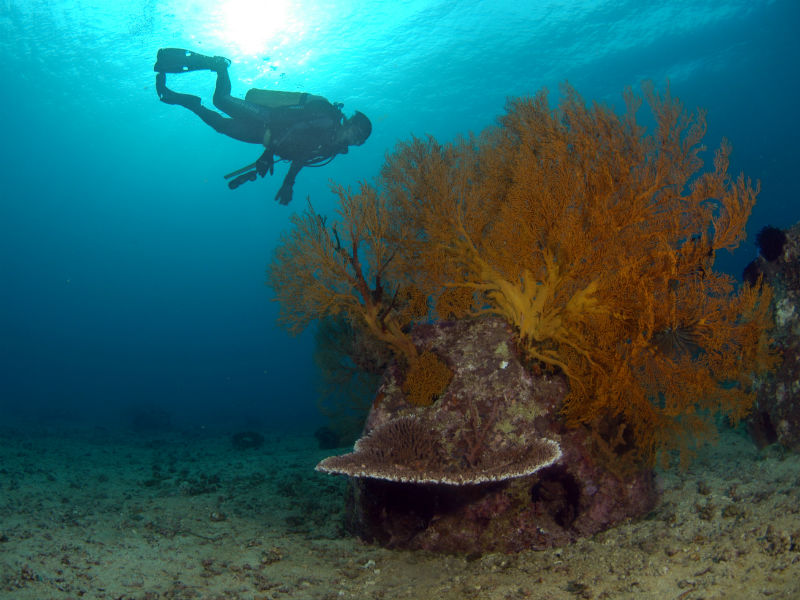 A diver swims past an Eternal Reef memorial in the sea