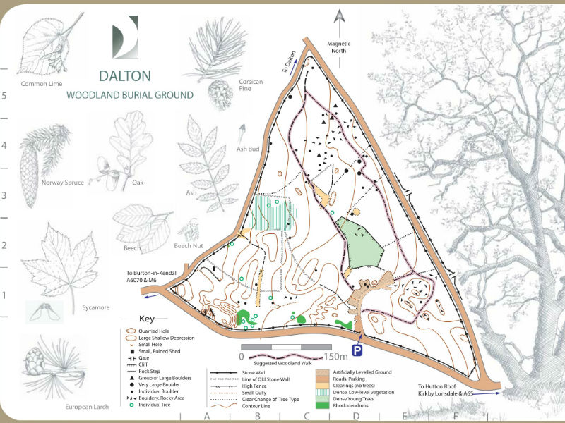 dalton Woods map