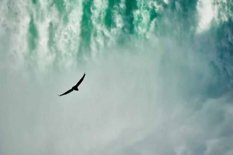 Photo of large black biord soaring near waterfall